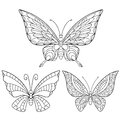 Zentangle stylized collection of three butterflies