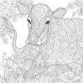 Zentangle stylized cow