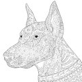 Zentangle stylized doberman pinscher dog Royalty Free Stock Photo