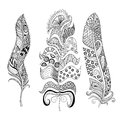 Zentangle stylized elegant feathers set. Hand drawn vintage