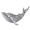 Zentangle stylized Sea Whale. Hand Drawn vector illustration iso Royalty Free Stock Photo