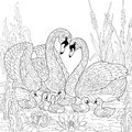 Zentangle stylized swan birds family Royalty Free Stock Photo