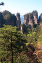 Zhangjiajie ancient mountains. Stock Image