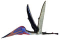 Zhejiangopterus Pterosaur