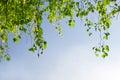 Zielone liści oddziału blue sky Zdjęcia Stock