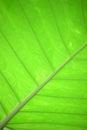 Zielony liść Obrazy Royalty Free