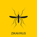 Zika mosquito vector. Virus alert. Aedes Aegypti  on white background Royalty Free Stock Photo