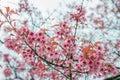 Zima kwiaty Zdjęcia Royalty Free
