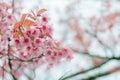 Zima kwiaty Obraz Stock