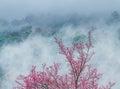 Zima kwiaty Zdjęcia Stock