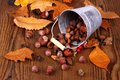 Zinc bucket with distributed acorn, chestnut and rosehip Royalty Free Stock Photo