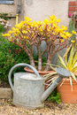 Zinc watering can traditional together with potted plants and water tank in the background Stock Photo