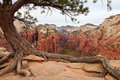 Zion Canyon Royalty Free Stock Photo