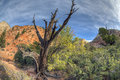 Zion National Park dead tree Royalty Free Stock Photo