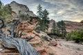 Zion National Park lightning struck tree Royalty Free Stock Photo