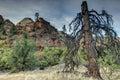 Zion National Park lignhtning struck tree Royalty Free Stock Photo