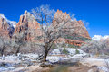 Zion park Royalty Free Stock Photo