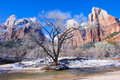 Zion park the national in utah on winter Stock Photos