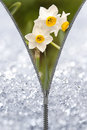 Zipper revealing narcissus under the snow Royalty Free Stock Images