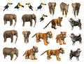 Zoo animals collection Royalty Free Stock Photo