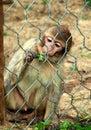 Zoo park poppi italy little barbary ape monkey a in the of tuscany Stock Photos