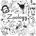 Zoology biology doodle icons of various animal species handwriting and education tools in white isolated paper background for Stock Images