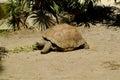 Zoology , turtle Royalty Free Stock Photo