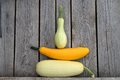 Zucchiny marrow marrows white yellow gourds squash vegetable potherb harvest crop fresh kailyard fertility fecundity prolific Royalty Free Stock Image