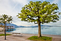 Zug promenade, Zug, Switzerland Royalty Free Stock Photo