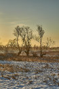 Zulawy Poland, frosty winter morning among fields Royalty Free Stock Photo