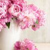 Pink peonies in vase. On wood background Stock Photo