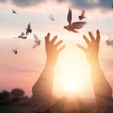 Woman praying and free the birds to nature on sunset background