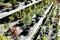 Stock Image :  Árbol de los bonsais en pote de cerámica