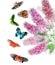 Stock Image :  Εικόνα Watercolor της πεταλούδας Μπους