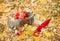 Stock Image :  Καλάθι με τα μήλα στα φύλλα φθινοπώρου στο δάσος