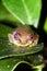 Stock Image :  Μάτια βατράχων καλάμων