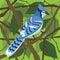 Stock Image :  Ο μπλε Jay σε ένα δέντρο