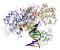 Stock Image : πολυμεράση DNA ι