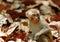 Stock Image :  Συνεδρίαση Macaque στο μέσο των ξηρών φύλλων