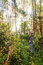 Stock Image :  Ταξίδι τροπικών δασών