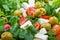 Stock Image : υγιής σαλάτα
