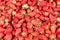 Stock Image : Φράουλα