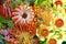 Stock Image : Φωτεινά αυστραλιανά εγγενή λουλούδια