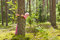 Stock Image : В лесе лета