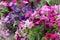 Stock Image : Красивейшие цветки лета
