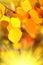 Stock Image :  крупный план предпосылки осени красит красный цвет листьев плюща померанцовый