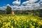 Stock Image : Ландшафт сельской местности с цветками и стогом сена