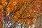 Stock Image : листво осени яркое
