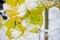 Stock Image : Листья последнего на дереве