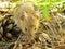 Stock Image :  Мышь леса